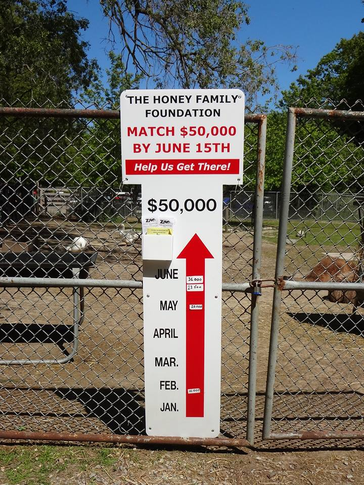 About the Honey Match Partners - High Park Zoo