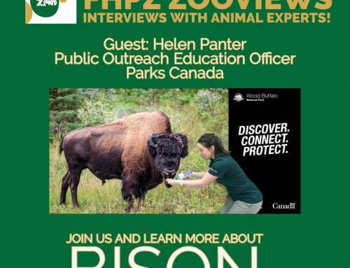 ZOOVIEWS – Learn more about bison (live!) – June 5 at 1:00pm EST
